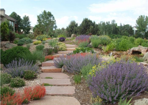xeriscaping area